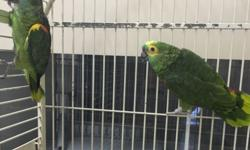 Proven breeding pair $1400