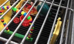 Blue masked lovebird for sale with cage. He can be tamed but patients is needed as he can be shy. $100 with cage and bowls, sticks, and some toys. Please contact if you have any questions. I always check my email. This ad was posted with the eBay