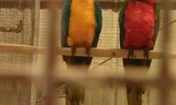 4 years ,healthy , great feather DNA'D male 1600 just Macaw 2300 with Cages By Design cage I am just getting out of birds. I don't have the time. 281-796-6506 This ad was posted with the eBay Classifieds mobile app.