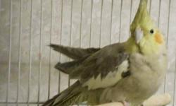 Used safeguard cages good for finches to ringneck size birds stackable e-mail call or text 3366539364 located in asheboro
