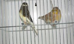 male is 2012 female is 2013 they are breeding pair