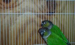 Excellent breeding pair of Hans macaw This ad was posted with the eBay Classifieds mobile app.