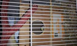 I have a pair of lovebirds that I would like to trade for one or a pair of another birds, or a baby bird. Please email me with questions. I am only interested in trading at this time. We live near Maysville, KY 41056, but can meet you or come to you