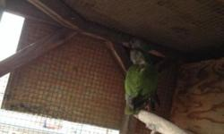 Hi I have 2 pairs of breeding Senegal parrots I'm asking 450.00 for each pair if you have any questions please call 9512649723 thanks. This ad was posted with the eBay Classifieds mobile app.