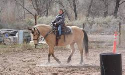 "Buttercup"" is a 14 yr old 14.1 hand Buckskin mare. she is great for most any rider. has a good handle on her, good with her feet, good to saddle, briddle, she is great to catch and load. she is Awesome on the trails and has NO issues with the water, dogs,"