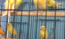 We have different color canaries male and female.. $40-$60 depending on the color......if interested call 619-942-1674 or visit : Arrieros Pet Shop 2550 Imperial Ave San Diego, Ca 92102
