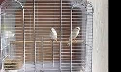 12 male canaries need new home adoption fee for the mix color is $20 white, red, yellow, green agate is $40 or 2 for $70 yellow opal is $60 please give me a call at 408-910-7233 if you are interested