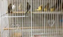 Hi have several birds for sale I have a variaty of finches some zebras/ some sad tail/some society/some German owl pigeons/some button quail/and some canaries some are breeders and some are young and some are created I'm asking for 40.00 and up for each