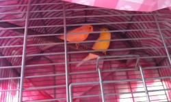 Canaries 1 Red Factor and 1 Yellow with Cap both Sing very good $50.00 each please call 1-408 886-8392