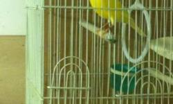 I have a variety of colors of canaries and all kinds of finches I have red, orange, white yellow canaries and, blue, green, gold Spanish timbrado canaries and waterslager canaries I am moving and cant take my beautiful birds with me if interested please