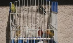 Hi I have alot of beautiful canaries for sale from $25 to $75 depending on the type of canary you want males and females all ready to breed veary healthy I also have a pair of parva europen gold finches that are also ready for breeding $175 for the pair