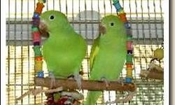 canary winged parakeets about a year and a half 6 left $100 each or $160 a pair these are breeders and are not tame also will trade for these birds at equal value!! call (619)392-2895