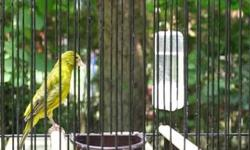 I have beautiful color canaries on sale.They re in perfect condition and ready to breed.If interested please give me a call.