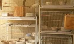 Used cages carriers and specially designed crates to ship birds.approved by airlines. have a walk in heavy duty wire aviary.can be taken apart to fit truck. 6x6x6.can hold macaws. Leave a number and I will call you back.