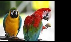 Cash for your parrot please contact me for more info 562-743-9320