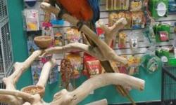 Beautiful Catalina Macaw!!! Just weaned and ready for it's new home! This baby Is such a sweetheart! Please PM me or call for more information South Elgin, IL 60177 847-695-5624 Like us on Facebook! AJ'S FEATHERED FRIENDS PET SHOP 804 N LA FOX ST SOUTH