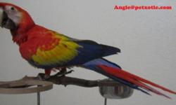 I have a 6 week old adorable, sweet catalina macaw baby available. Please call Vicki at 1-443-835-0937 for further information.