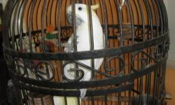 """We are a bird rescue/sanctuary located in WPB loxahatchee area.Our adoption fees help maintain the facility and also cover some of the cost of health screening.We are looking for suitable homes for our feathered friends. """" Sherbert"""" was kept as a pet and"""