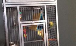 These guys are very entertaining. They are good buddies so must go together. Both a under two years old. Cage is three years old.