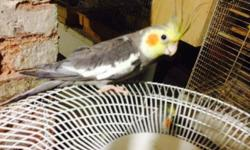 Selling Cockatiel for $70 a pair for moving purposes. This is the best deal your going to find. This ad was posted with the eBay Classifieds mobile app.