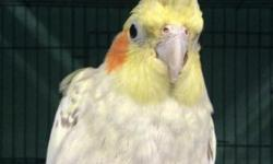 We have several Cockatiels, many colors and male/female call for more info 619-677-3269