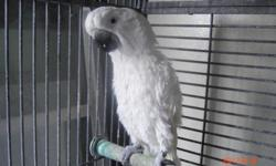 I have one Cockatoo she very sweet never bite, but not tame she's not screams and mess cage not included.