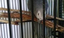 I'm rehoming my 3 year old Congo African Grey. She has been around kids, cats, dogs and another African Grey. Talks and whistles. She comes with her cage, toys, standing perch and food (must take all together). $1000 for all. I will not let her go to just