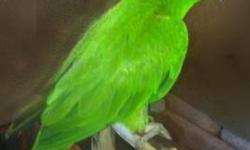 Conure - Petie - Small - Adult - Bird Petie is a White-eyed Conure who was found by the family who had him for a number of years. Their employment-forced move out of state prompted his relinquishment. He is a fun little guy who is very interested in human