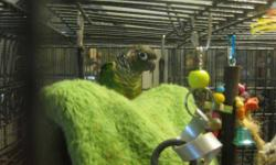 Conure - Sammie - Small - Young - Female - Bird Sammy is an adorable Nanday Conure who came from another rescue. She is used to being a family environment, but tends to prefer women over men. She is handicapped ~ missing one of her wings. Because of this