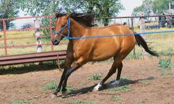 Smooth Lady Dillon -- AQHA #4917816 2006 Cremello Mare Izzy is a really pretty, well built cremello Quarter Horse mare. She stands 15.2hh and is broke to ride. She is friendly and will be an excellent addition to any riding or breeding program! Izzy has