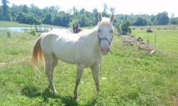 I have a beautiful Cremello mare that needs a new home.. She was at one time a childs lesson horse, but I believe that somewhere between then and when I got her, she was mistreated.. She has great ground manners, very sweet once she knows you, and will