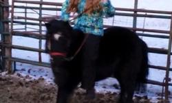 9 year old mini x Shetland cross mare - rides and drives. Very gentle. Has current negative coggins.