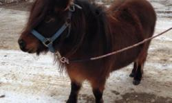 Super cute and friendly minature mare. 36 inches - bred to a mini stallion for 2015. Started riding. Open to trades. $400. Delivery possible for an additional fee. Please call or text as emails through here seem to disappear!