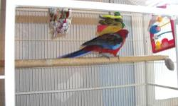 Package deal 3 Pennant (crimson) Rosellas DNA'd/banded...Pair M Blue 05.. F split to blue 03( not proven.) Single F Blue 05 ...Kings doubledecker cage included. $750 pic of 1 Blue. If purchased separate M/F pair $500....Blue F $300...Cage $100... (978)