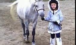Our ponies are solid citizens who are sweet & reliable. They work in all our programs with our students young & old. Our ponies have terrific ground manners, are dependable under saddle & are jumping courses. They are quiet on the trails, sound, healthy,