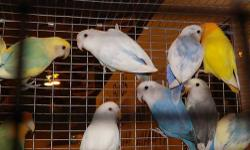 Are you shopping for birds? Do you want great deals on seed, cages or toys? Then check out the Capitol City Bird Society?s 31st Annual Pet Mart and Exotic Bird Show on October 6, 2013. The event is 9 a.m. to 4 p.m. at the Scottish Rite Masonic Center,