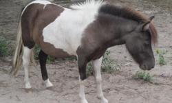 Donkey - Slim - Large - Adult - Male - Horse Slim is an adult gelded male Donkey. He is very friendly. Slim's adoption fee is $300.00. CHARACTERISTICS: Breed: Donkey Size: Large Petfinder ID: 25357385 ADDITIONAL INFO: Pet has been spayed/neutered