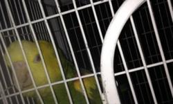 Not tame is a breeding bird we have him as a pet need room so he is for sale comes with a cage 400 OBO This ad was posted with the eBay Classifieds mobile app.