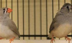 Dove - Casper - Small - Senior - Bird CHARACTERISTICS: Breed: Dove Size: Small Petfinder ID: 25659151 CONTACT: Wisconsin Humane Society | Milwaukee, WI | 414-ANI-MALS For additional information, reply to this ad or see: