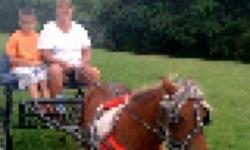Red/white spotted mare, 33.75 inches tall. Easy to handle. Drives great. Feet recently trimmed. Traffic safe, have led kids on here, supposed to be broke for them to ride by themselves. Pony 450, pony with cart and harness 650 obo. Milton Wv. Call or text