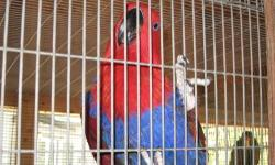 Special needs Eclectus male. Not tame, breeder. Beautiful male. He needs a special home. He has over grown beak. I will only let him go to the right home.