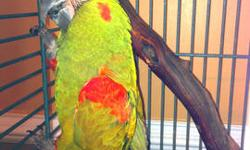 Have to sell my bonded pair of male/female eclectus parrots They are both friendly, comes with nice avian adventures case, ect. They eat a variety of foods, including seeds/pellets fruits and veggies. Female is in perfect feather, male just coming out of