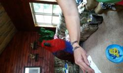 Female eclectus parrot and huge cage with all toys. She is 2 years old. I have had her since she was a baby and hand fed her. She is my baby and it breaks my heart that I have to rehome her. If you are interested in her you can call or text me at