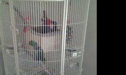 Pair of bonded male and female Eclectus parrots. They are 4 years old and have a great temperament. They are great breeders and have had 6 babies. They come with nice corner cage that is only a year old, lots of toys (some are brand new), large bag of