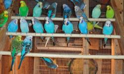 Breeders and young birds available. Call Greg for information 813-763-6769
