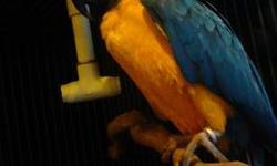 I have Escarle macaw for sale whit a big cage This ad was posted with the eBay Classifieds mobile app.
