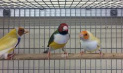 Looking for a specific bird? Give us a call, we have a variety of birds at Arrieros Pet Shop. 2550 Imperial Ave. San Diego, Ca 92102 or call 619-677-3269 9531 Jamacha Blvd. SpringValley, Ca 91977 or call 619-434-3207