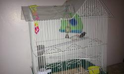 I HAVE 2 FINCHES ONE IS WHITE ONE IS BROWN ANY QUESTION FEEL FREE TO CALL ME AT 585-369-9799 THANK U
