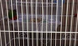 Hi I have three pairs of deferent's finches red headed parrot finches with the cage $200 or best offer,a pair of spice finches for $50 include the cage,a pair of societi finch for $25 call or text Nicolas (619)997-52 93. Hablo espaniol tambien thanks This