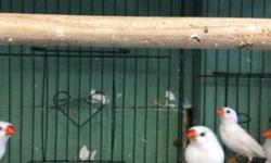 We have many types of Finches, female and male...call for more info.. We guarantee the lowest prices in town! 619-677-3269
